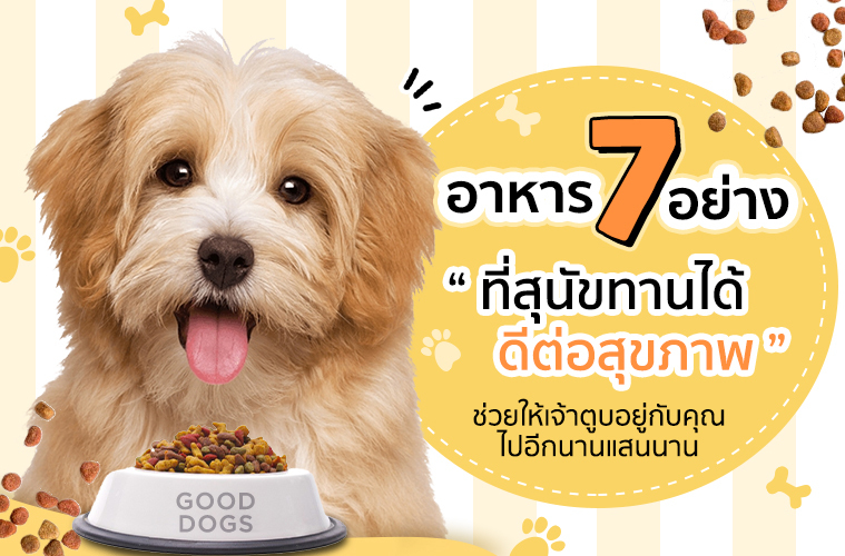 7 food dog can eat
